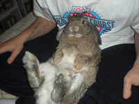 Squishy Lump On Bunny : Uncategorized Great Lakes Rabbit Sanctuary Page 2