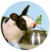 Great Lakes Rabbit Sanctuary Tours