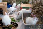 white_buns_DSC_5060
