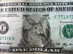 Bunny bucks 2