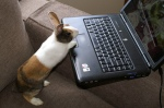 bunny-computer